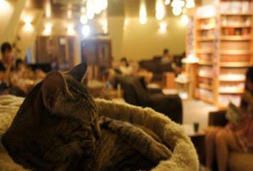 Открытие кофейни CatLand