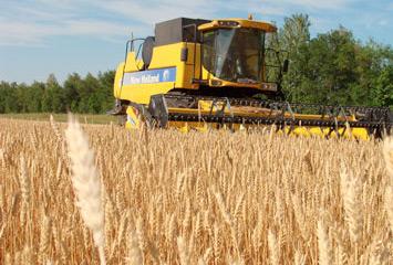 Выращивание пшеницы в Акмолинской области