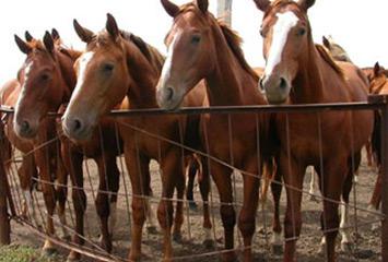 Организация деятельности по разведению лошадей в Акмолинской области